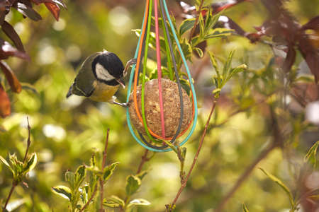 Bird food hangs on a tree, where birds can be found even in spring.