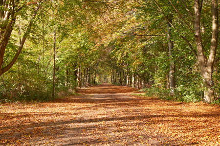 A wide forest path in autumn, covered with leaves.