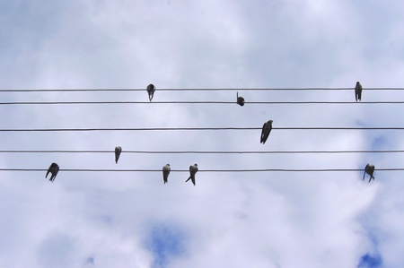 hilarity: birds on wires on sky background
