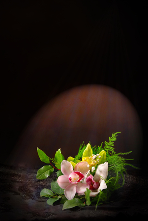 Composition with orchid flowers on a dark background photo