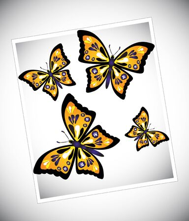 Set of colorful butterflies on white background
