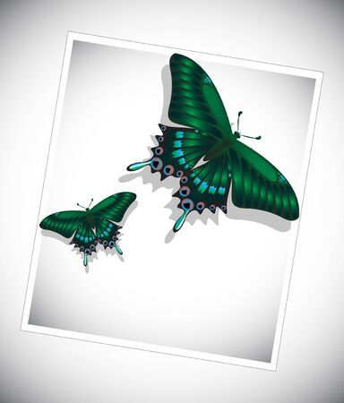 antennae: Set of colorful butterflies on white background