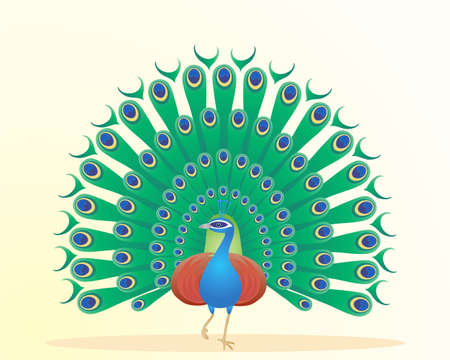 displaying: an illustration of a beautiful peacock displaying colorful feathers on a pale yellow background Illustration