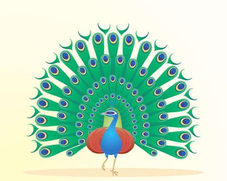plumas de pavo real: una ilustración de un hermoso pavo real que muestra plumas de colores sobre un fondo amarillo pálido