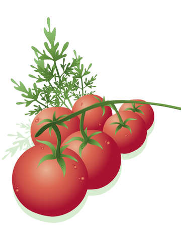 home grown: an illustration of fresh vine tomatoes with parsley leaves on a white background