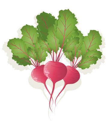 root vegetables: an illustration of three bright red beetroot plants with crimson stems and green leaves on a white background