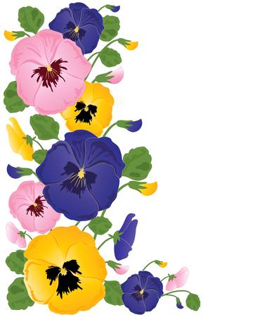 흰색 배경에 화려한 팬지 꽃 봉오리와 잎의 그림
