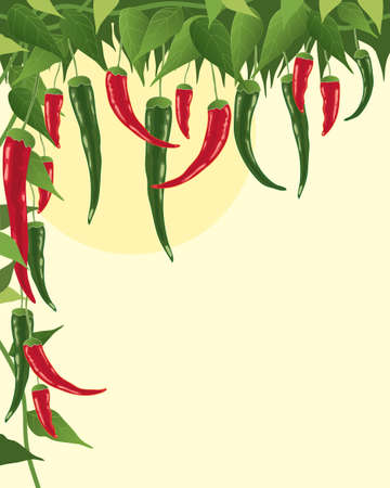 an illustration of red and green chillies growing amongst foliage under a big yellow sun Çizim