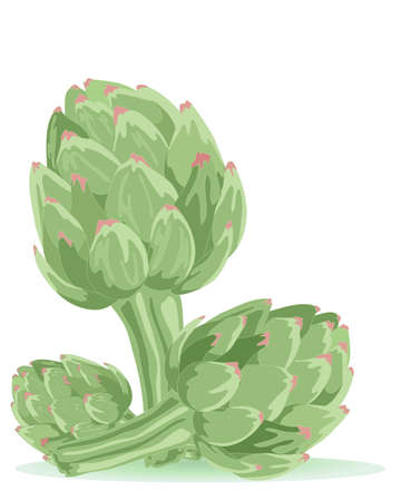 an illustration of three artichokes isolated on a white background Stock Vector - 13308636