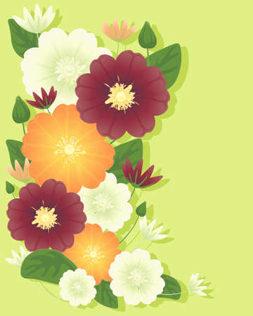 an illustration of clematis flowers in orange cream and maroon with foliage and buds on a pale green background with shadow Stock Vector - 13730052