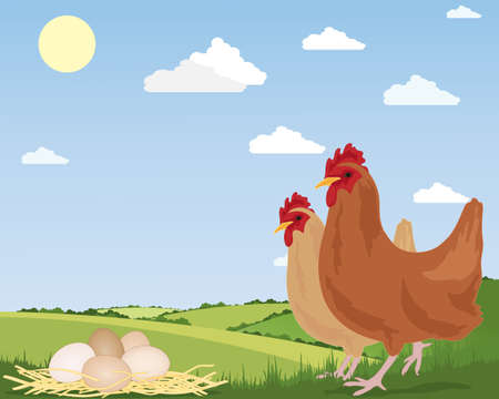 an illustration of two free range chickens with newly laid eggs on straw and scenic countryside under a blue summer sky