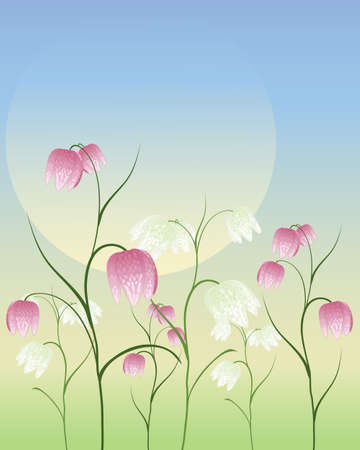 an illustration of purple and white fritillaria flowers in a spring meadow under a big sun Stock Vector - 14662660
