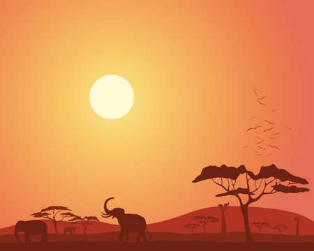 roosting: an illustration of a colorful african landscape with acacia trees hills elephants and roosting birds under a bright sunset sky Illustration