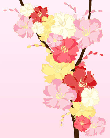 crimson: an illustration of pink white and crimson cherry blossom with buds on a pink background with space for text