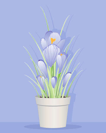 an illustration of beautiful purple springtime crocuses in a pot with foliage and buds on a lilac background Illustration