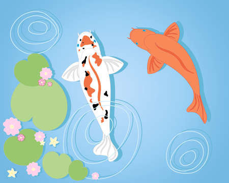 an illustration of two colorful koi carp simming in a pool with aquatic plants and water ripples on a blue background