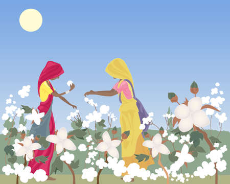 an illustration of two traditionally dressed women laborers in india picking cotton in a field under a hot sun and blue sky