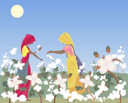 una ilustración de dos vestidos tradicionalmente las mujeres trabajadoras en la India recogiendo algodón en un campo bajo un ardiente sol y el cielo azul Ilustración de vector