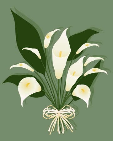 an illustration of a bouquet of calla lilies with a rustic bow on a green background Vector