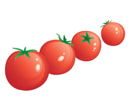 home grown: an illustration of a row of freshly picked red cherry tomatoes isolated on a white background