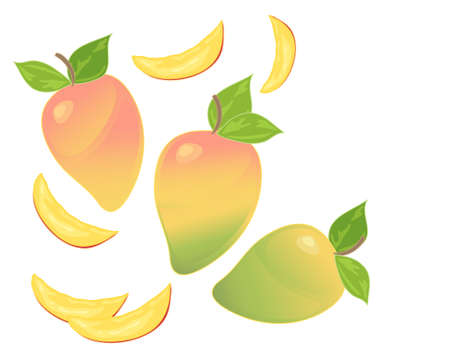 ripening: an illustration of a mango fruit design ripening in various stages with juicy slices on a white background with space for text