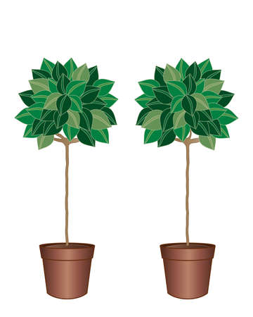 topiary: an illustration of a pair of decorative bay trees in brown pots with green foliage isolated on a white background Illustration