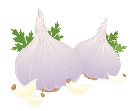 clous de girofle: une illustration de frais ail ampoules feuilles de coriandre et les clous de girofle isol� sur un fond blanc Illustration