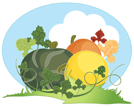 an illustration of three colorful home grown squashes in the fall with foliage tendrils and grassy mound with blue sky  Illustration