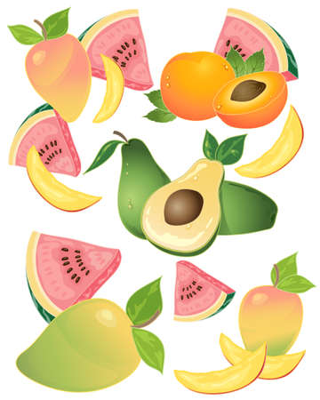 an illustration of delicious tropical fruit with mango avacado melon and apricot on a white background Vectores