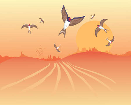 hedgerows: an illustration of a flock of swallows getting ready to leave in autumn under a golden harvest sunset Illustration