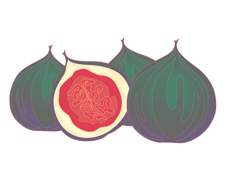 halved: an illustration of halved and whole fig fruits isolated on a white background