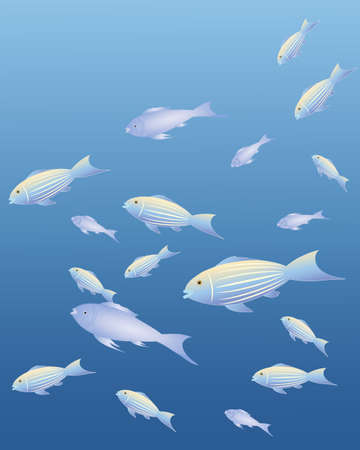 sea side: an illustration of exotic fish with fancy patterns and color swimming on an ocean color background