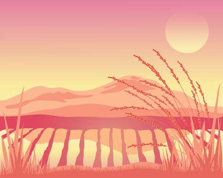 arrozal: una ilustraci�n de un campo de arroz asi�tico con el paisaje de monta�a al atardecer en rosa y rosa colores