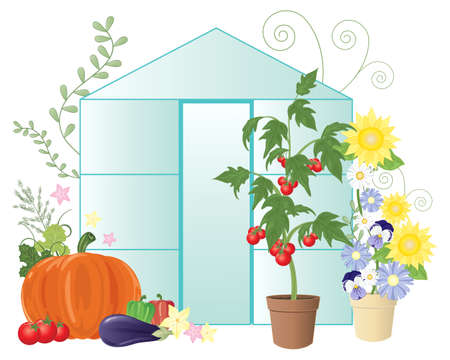 in the greenhouse: an illustration of a summer greenhouse with flowers and home grown vegetables including tomatoes on a white background