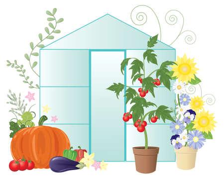 invernadero: una ilustraci�n de un invernadero de verano con flores y verduras de cosecha propia, incluyendo los tomates en un fondo blanco