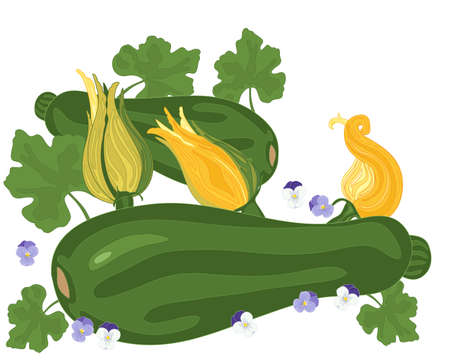 Courgette plants with foliage and flowers on a white background Illustration