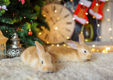 hares: two fluffy hares under a New Year tree, a set of bright festive sparks on a background, waiting for a holiday Stock Photo
