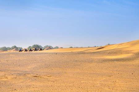 caravan of camels goes to the desert, Sahara Desert dunes in bright sunny day