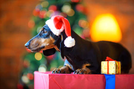 a small dog in a Santa Claus hat sits on a large gift box and looks out the window, next to it is a small gift