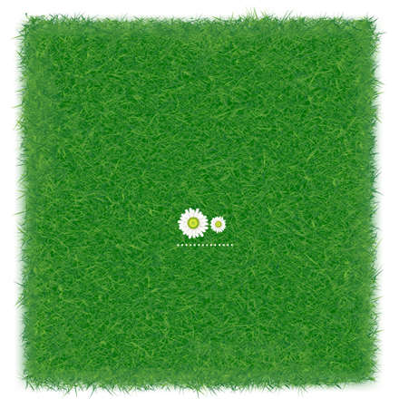 Green grass realistic textured background isolate white background