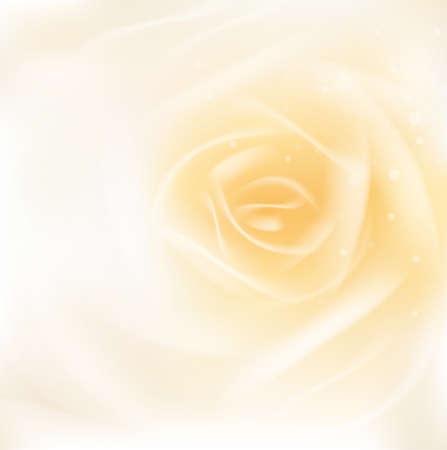 smooth background: rosa o bellezza concetto di fondo liscio