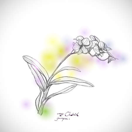sketch sketches: orchid sketch drawing isolated on white background, vector illustration
