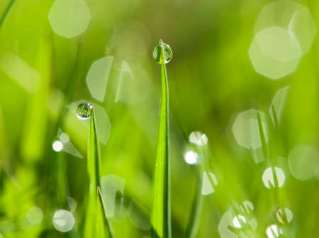 morning dew drops on the green grass Stock Photo