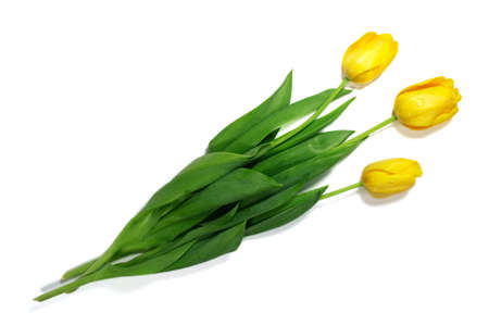 topaz: topaz tulips bouquet