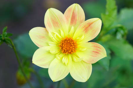 Closeup of yellow flower in garden Stock Photo - 2852499