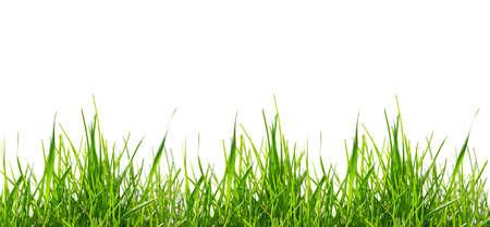 green grass pattern photo