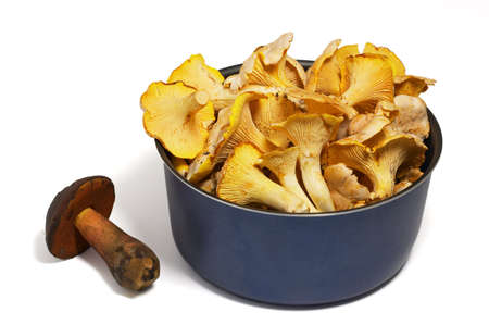 cantharellus cibarius: Closeup of pan of chanterellies and boletus mushroom on white background with shadow. Edible mushrooms: Chanterelle (Cantharellus cibarius) and Boletus mushroom (Boletus edulis).
