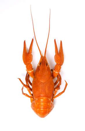 Closeup of isolated crayfish on white background