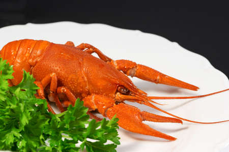 Crayfish on plate (black background)