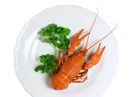 Closeup of crayfish on plate - isolated on white background Stock Photo - 5882693